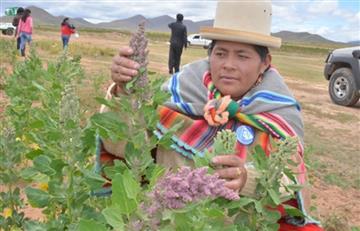 Morales se une a la gestión por el 'Día Internacional del Consumo de Quinua'