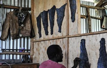 Cuero de pescado, la nueva tendencia para crear objetos