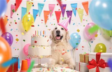 ¿Cuándo se celebra el Día Mundial del Perro?