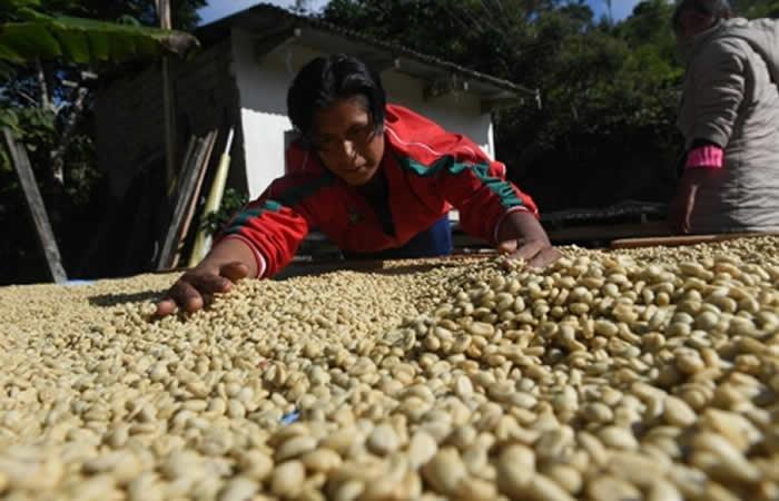 Gobierno aprueba decreto para producción de café orgánico. Foto: ABI