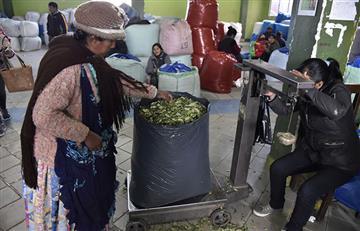 La Paz, epicentro de la venta legal de la hoja de coca
