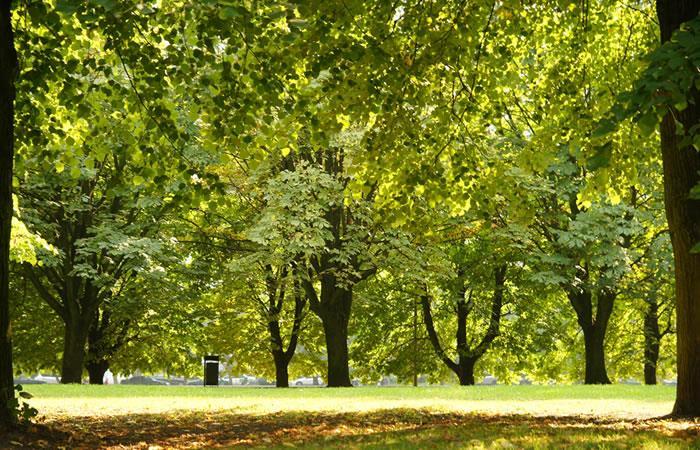 ¿Cuándo y porqué se celebra el Día del árbol?. Foto: Shutterstock