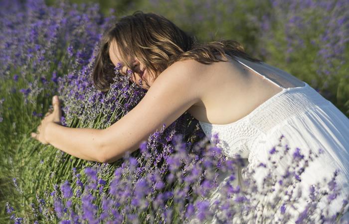 La lavanda desprende una agradable fragancia que actúa como relajante. Foto: Shutterstock