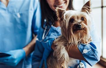 Lenguaje corporal: ¿Cómo saber lo que dice mi perro?