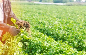 Bolivia y Argentina intercambian experiencias en producción agroecológica