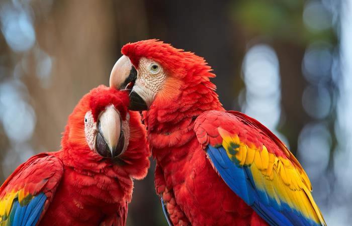 Bolivia importante en avistamiento de aves. Foto: Shutterstock