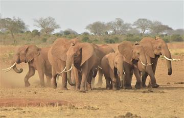 ¡Preocupante! En 44 años la Tierra perdió el 60% de sus animales salvajes