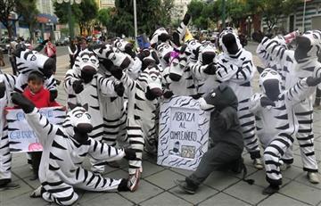 Las simpáticas cebras celebran 17 años entre bailes y abrazos