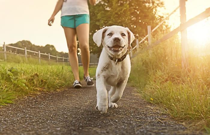 Animales de refugios tendrán mejor oportunidad con la app. Foto: Shutterstock.