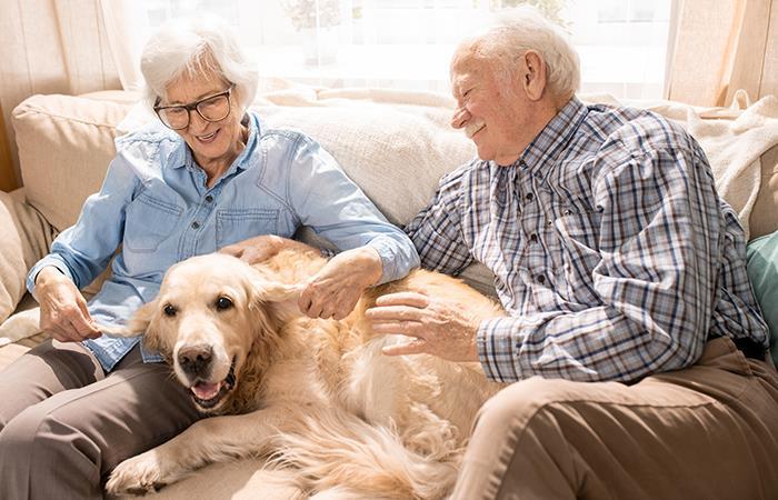 El bienestar que buscas te lo puede brindar una mascota. Foto: Shutterstock