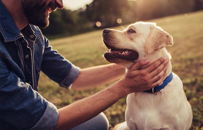 Descubre la edad exacta de tu perro. Foto: Shutterstock