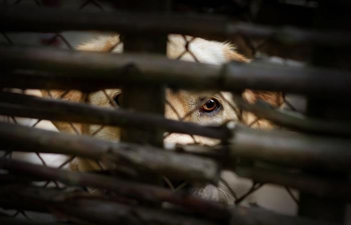 Policía y Alcaldía decomisan 40 animales que se comercializaban en mercado de Oruro