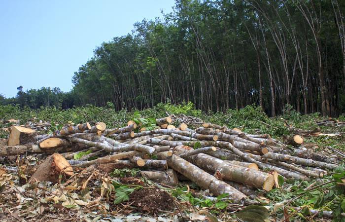 La deforestación afecta a nivel mundial. Foto: ShutterStock