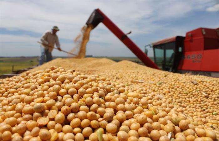Morales anuncia medidas para exportar soya sin perjudicar al mercado interno del país. Foto: ABI.
