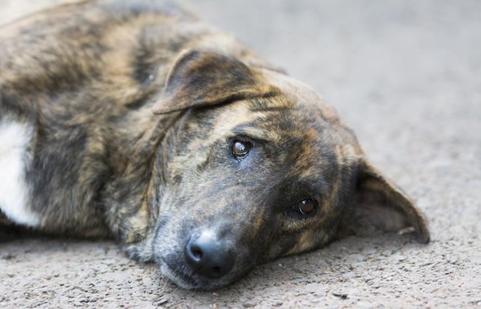 Cuidemos a nuestras mascota más en estos tiempos donde la temperatura es muy baja. Foto: Shutterstock