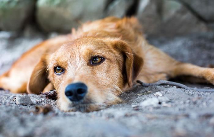 Ayuda a los perritos abandonados y si puedes, adopta uno de ellos. Foto: Shutterstock