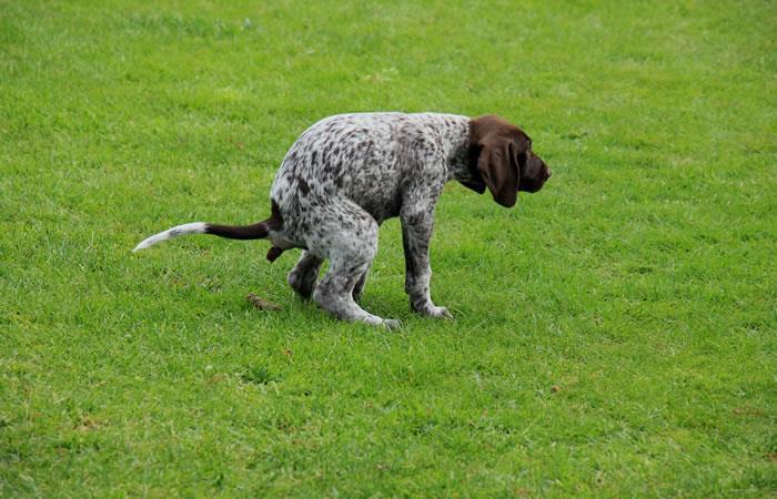 Un perro se robó las miradas en un partido colombiano. Foto: ShutterStock.