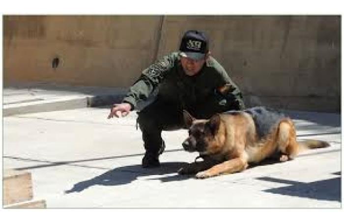 Perros entrenados para buscar drogas. Foto: ABI.