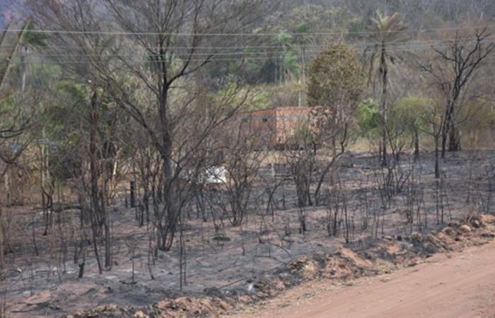 Amazonas en llamas. Foto: Abi