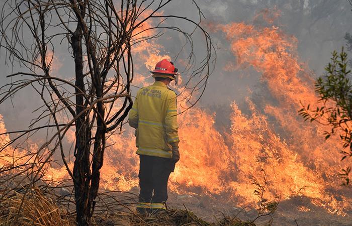 Autoridades bolivianas luchan día a día contra el fuego en la chiquitania boliviana. Foto: EFE