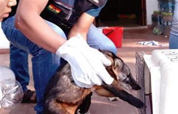 Centro de rescate atendió 43 especies de animales afectados por los incendios en Santa Cruz