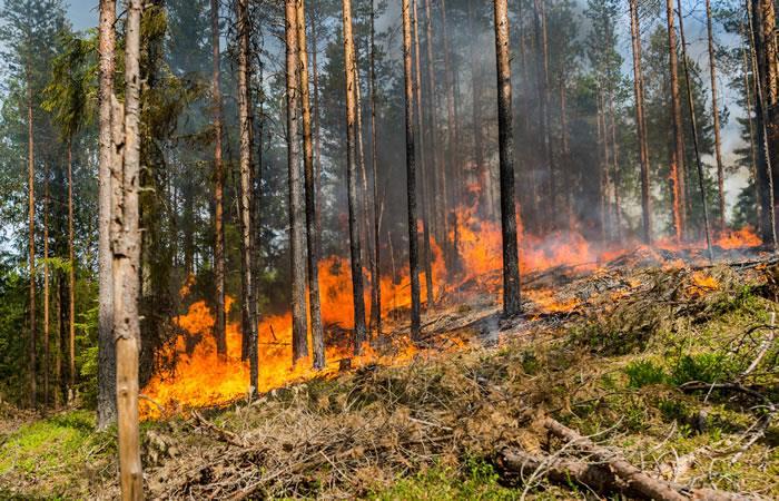 Incendios forestales en la Amazonia. Foto: ShutterStock.