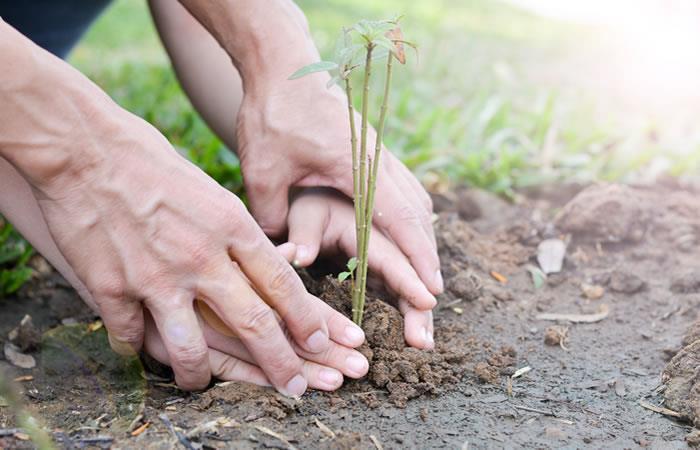 Cuidemos el medio ambiente y a nuestra Madre Tierra. Foto: ShutterStock.