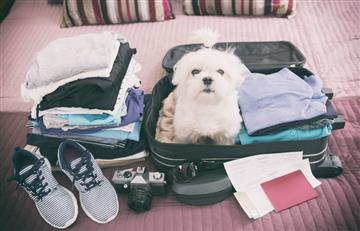 Alista tus maletas y prepara a tu mascota para viajar