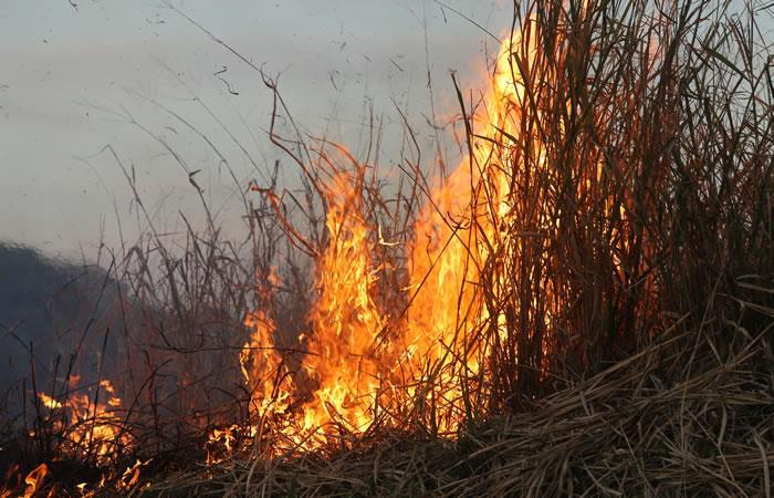 Incendio en el Parque Nacional Tunari. Foto: Shutterstock