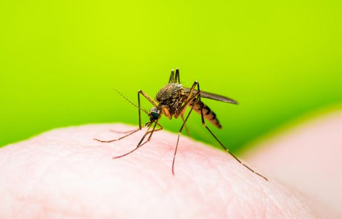 Más de 90 casos de dengue se han reportado en Beni. Foto: Shutterstock