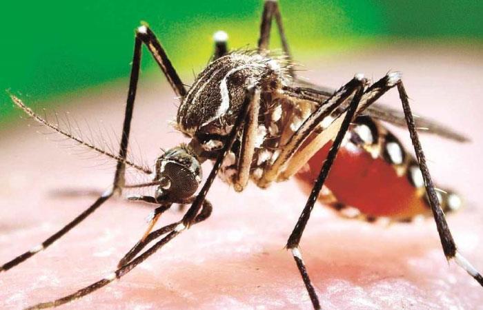 Cada año, para esta temporada, aumentan las alarmas por dengue. Foto: Twitter @NotisaludB