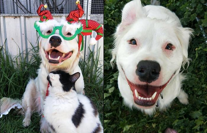 Su condición de sordera y ceguera no ha impedido que este 'héroe de 4 patas' ayude a otros animales. Foto: Facebook Sherio's Shenanigans
