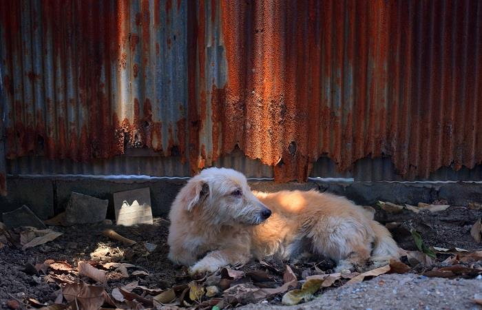 Mascotas victimas letales del coronavirus  Foto: shutterstock