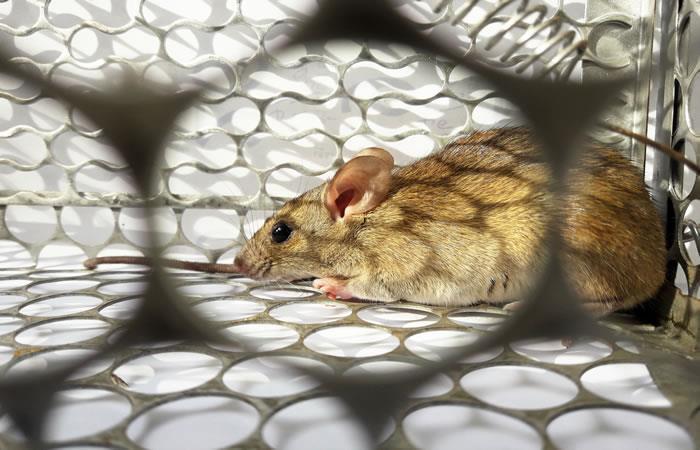 Nueva enfermedad en China. Foto: Shutterstock.