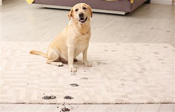 Método casero para limpiar las patas de las mascotas