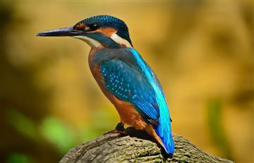 Bolivia logra el sexto lugar en avistamiento de aves