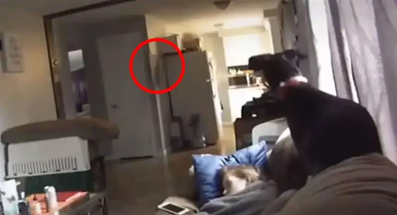 Los perros pueden detectar la presencia de un 'ente' paranormal. Foto: Youtube / Captura canal VIRALINTUS