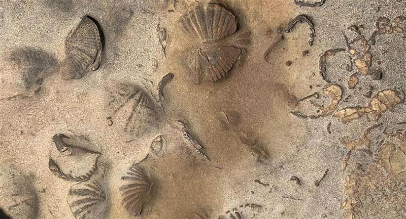 Hallazgo de restos fósiles de animales marinos en el Territorio Indígena Parque Nacional Isiboro Sécure (Tipnis). Foto: EFE