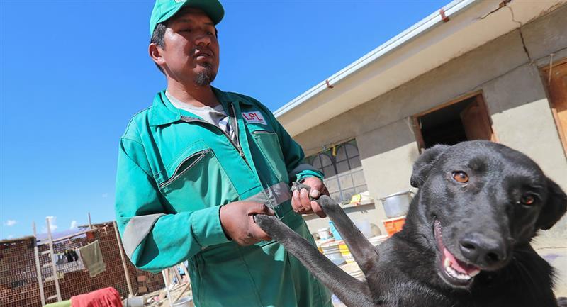 Este imparable trabajador sostiene que continuará rescatando animales mientras tenga vida. Foto: EFE