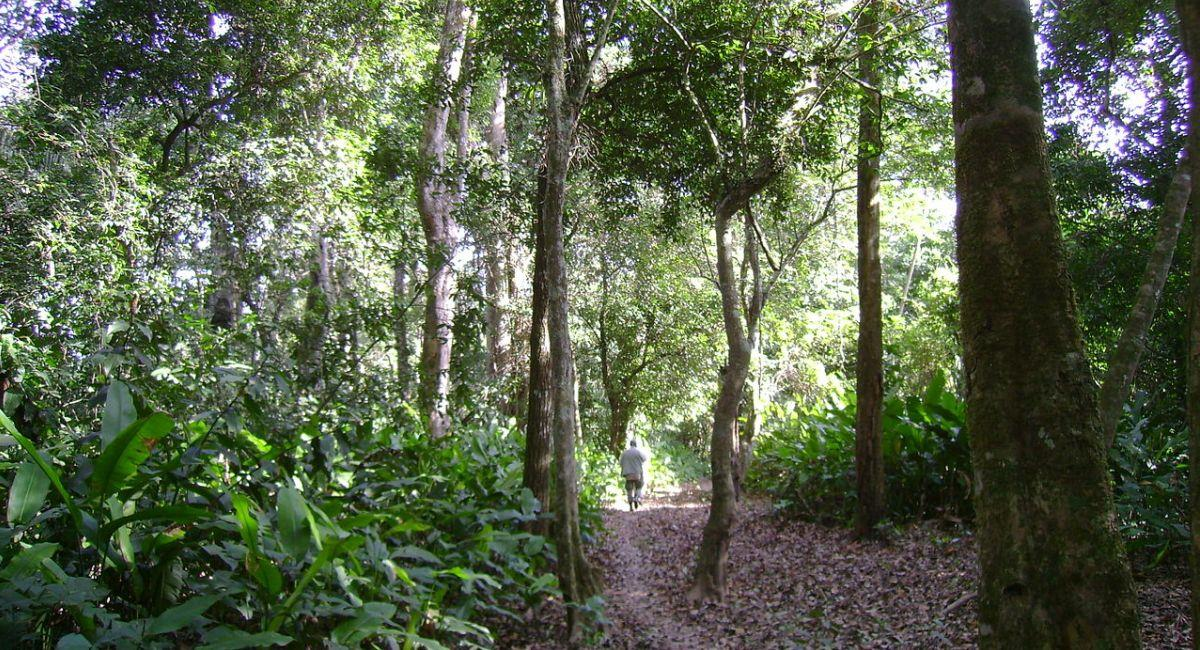 Territorio Indígena Parque Isiboro Sécure. Foto: Wikimedia Commons