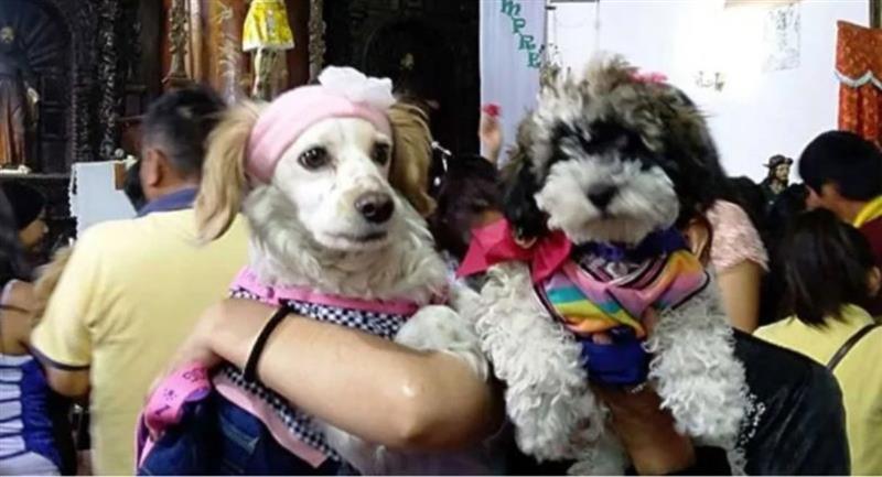 Feicobol organiza una feria virtual de mascotas. Foto: ABI