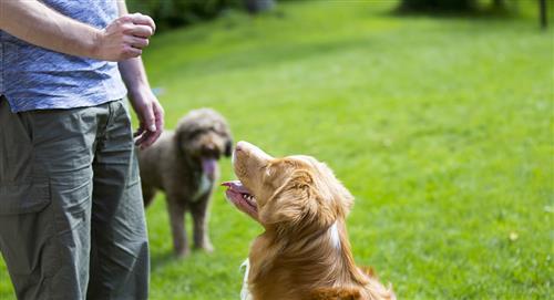 ¿Cómo educar a nuestro perro? Trucos de adiestramiento canino
