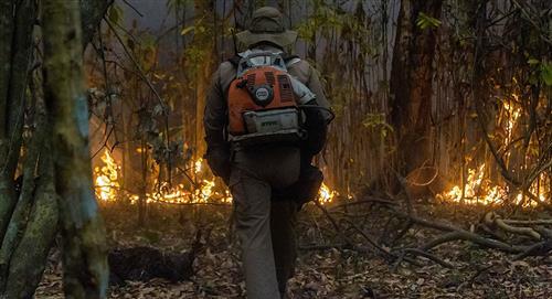 La fauna silvestre lucha por sobrevivir al fuego en el mayor humedal del mundo