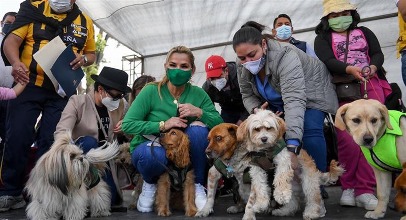 Campaña de desparasitación canina que realizó la Alcaldía de La Paz. Foto: ABI