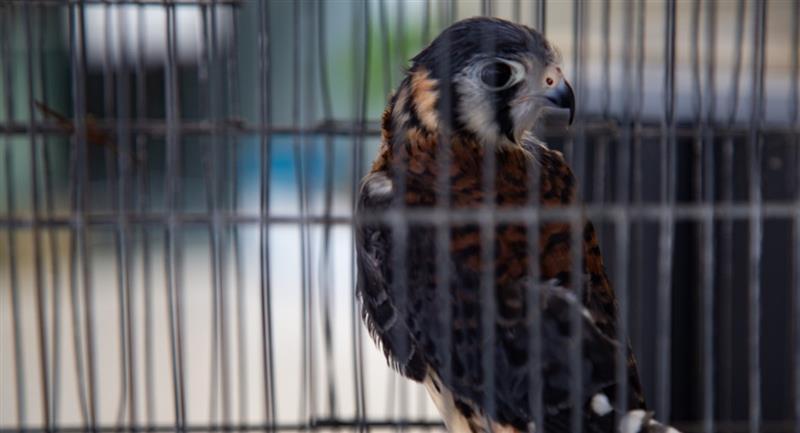 Animales que fueron rescatados. Foto: ABI
