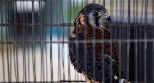 Rescatan al menos 30 animales de especies domésticas y silvestres en Cochabamba