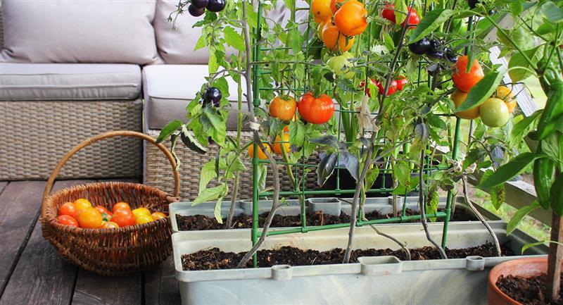 Recuerda preparar una adecuada composta previa mezclando tierra, agua y restos orgánicos. Foto: Shutterstock