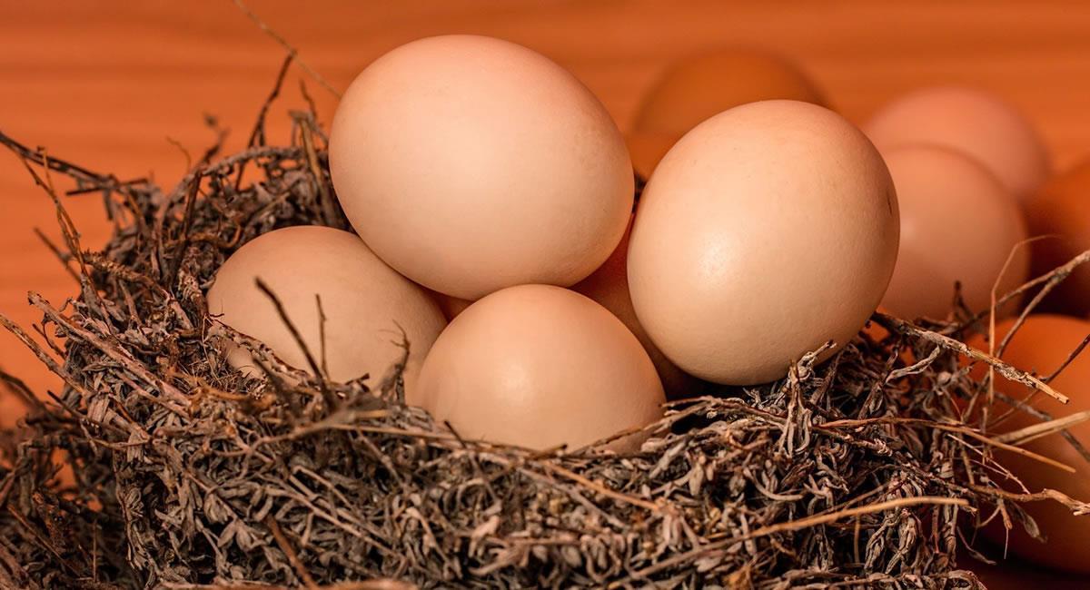 Esta semana se hace en conmemoración al 'Día Mundial del Huevo'. Foto: Pixabay