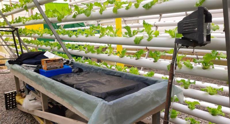 Cultivo hidropónico de lechugas de la empresa Ecofresh. Foto: ABI