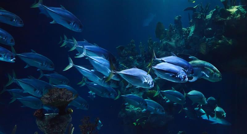 Los significados pueden depender del tipo de pez, tamaño, color, cantidad y hasta localización. Foto: Pixabay